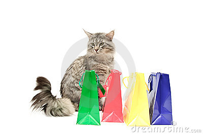 Grey cat with purchases