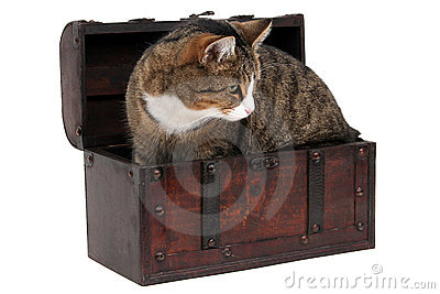 Grey cat in treasure chest