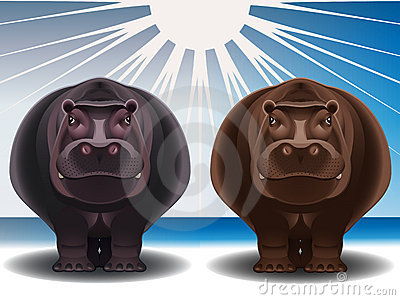 Grey and chocolate hippopotamuses