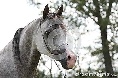 Grey filli