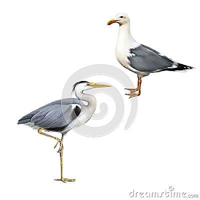 Free Grey Heron, Ardea Cinerea, White Bird Seagull Royalty Free Stock Images - 54378019
