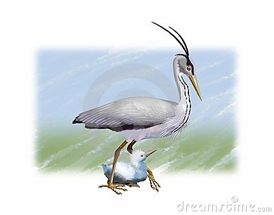 Grey Heron and chick