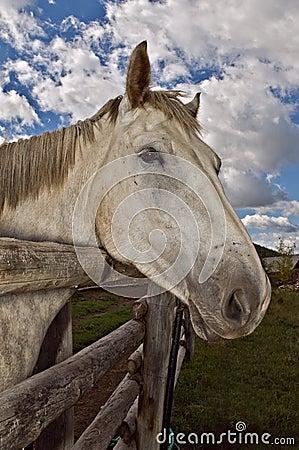 Grey horse blue sky