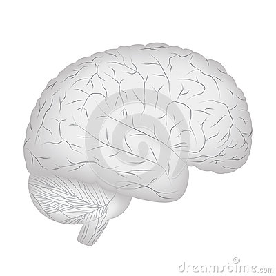 Grey human brain.