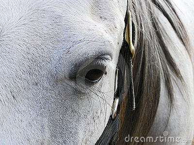 Grey mare s face