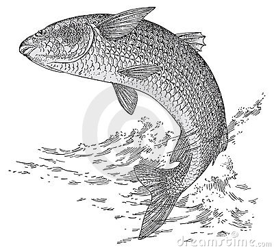 the mullet species essay Ok, a mullet isn't only a fish, though that sense - dating to the 14th century - is the  oldest (more than one species has been called mullet, but.