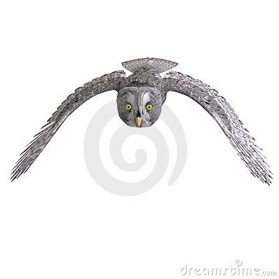 Free Grey Owl Bird Stock Images - 15119074