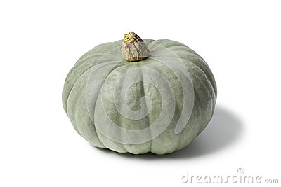 Grey pumpkin named Confection
