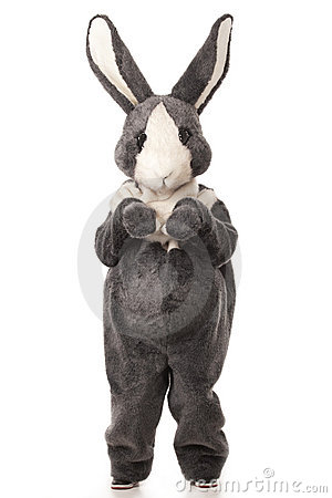 Grey rabbit
