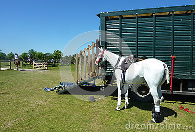 horse and horse box
