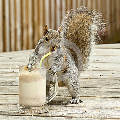 Free Grey Squirrel Royalty Free Stock Photography - 28788027