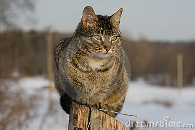 grey tabby cat sitting on post royalty free stock photo