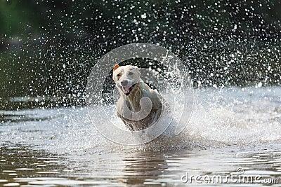 Greyhound 4