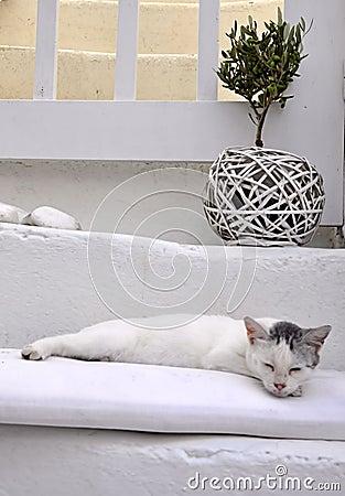 Griechische Katze