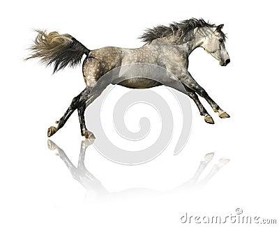 Grijs paard dat op wit wordt geïsoleerda
