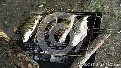 Grilling trout