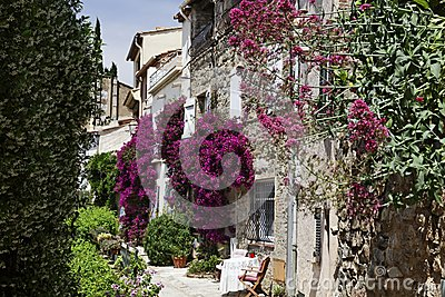 Grimaud, Old town lane with Bougainvillea glabra, Lesser Bougainvillea, Paper flower, Cote d'Azur, Southern France, Europe