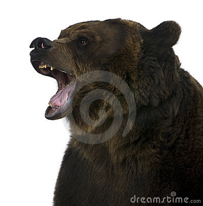 Free Grizzly Bear, 10 Years Old, Growling Stock Images - 15287594