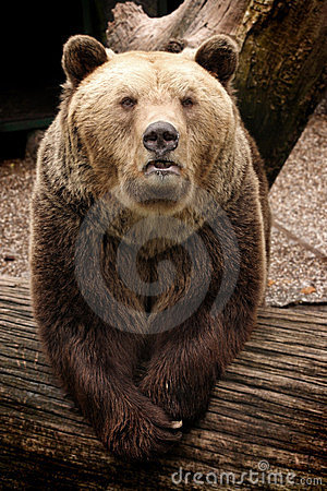 Free Grizzly Bear Stock Photo - 23744470