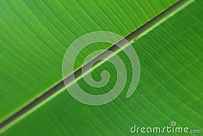 Grön leafyttersida