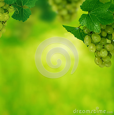 Gröna druvor med lämnar