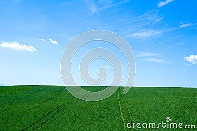 Grünes Feld 5