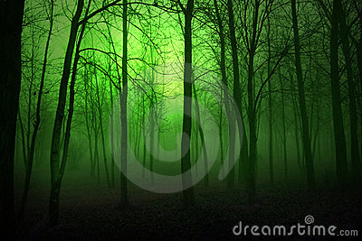 Grünes Holz