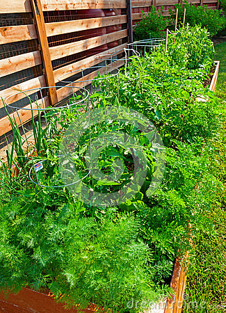 Grönsakträdgård
