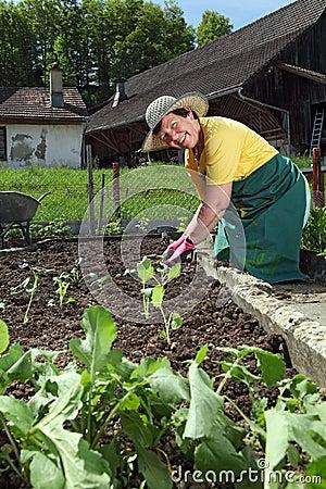 Großmutter, die Gemüse pflanzt