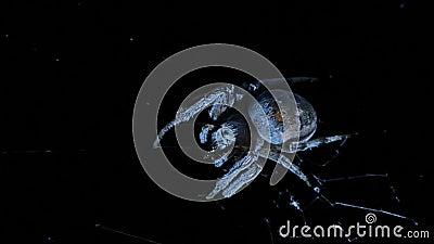 Große Spinne auf Netz stock video footage