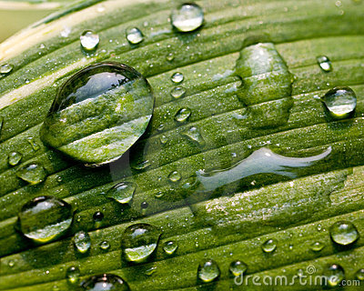 Groen Blad met de Druppeltjes van het Water