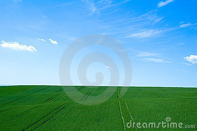 Groen gebied 5