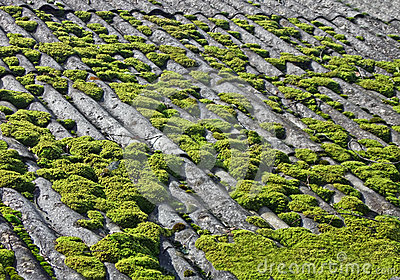 Groen mos op grijs wijnoogst betegeld dak stock fotografie afbeelding 26322152 - Wijnoogst ...