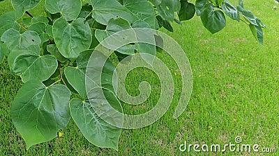 Groene bladeren en vers gras stock videobeelden