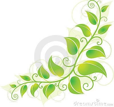 Groene hoekwijnstok