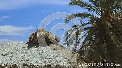 Groene kokospalmen op kustlijn Ongelofelijke hemel witte wolken en eindeloze skyline Curaçao-eiland stock footage