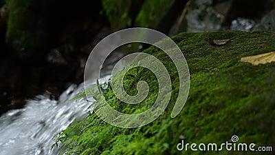 Groene mos en waterval in regenwoud stock video