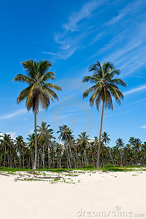 Groene palmen op een wit zandstrand