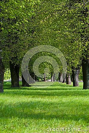 Groene steeg in het park