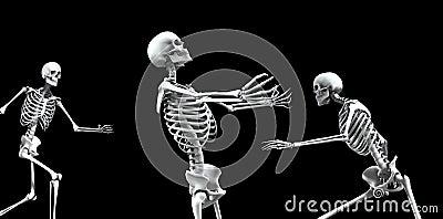Groep 4 van het skelet