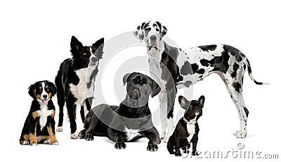 Stock foto s groep honden