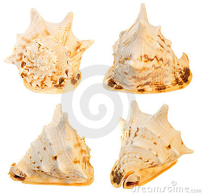 Großer Seashell. Collage