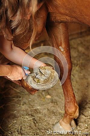 Groom cleaning horse s hoof