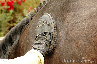 Groom Cleans Horse Stock Photo - Image: 587