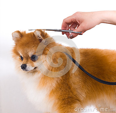Free Grooming Dog Royalty Free Stock Photos - 30562258