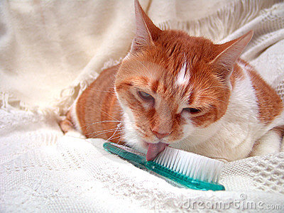 Grooming Kitty Licking Brush