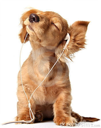 Free Grooving Puppy Royalty Free Stock Image - 3978556
