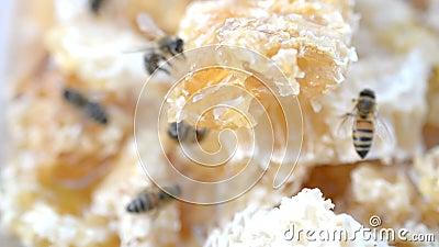 Gros plan de la cellule de miel avec mouvement des abeilles banque de vidéos