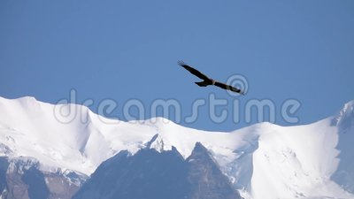 Grote Eagle Bird Flying Over Himalayan-Bergketen stock footage