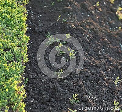 Ground and grass